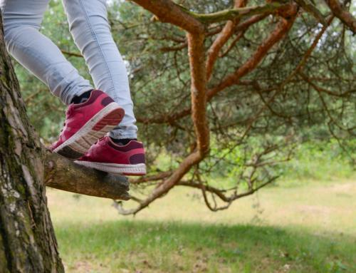 Should I let my kid climb trees? We asked five experts